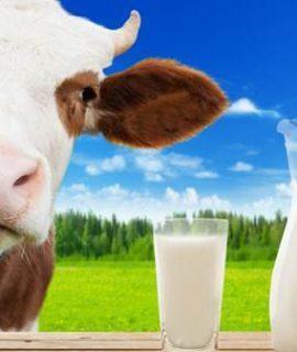 Consumo de leite e derivados piora alergias respiratórias?