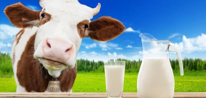 consumo de leite